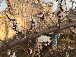 """Фотографии """"Мой сад"""" май 2015 - Западный 2"""