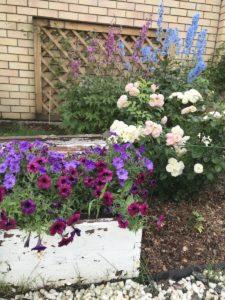 Мой сад Июль 2018